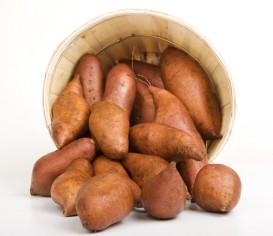 sladké brambory